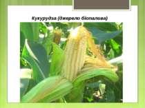 Кукурудза (джерело біопалива)