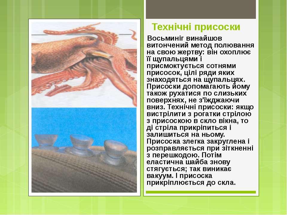 Технічні присоски Восьминіг винайшов витончений метод полювання на свою жертв...
