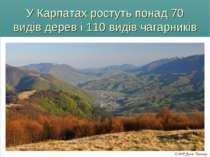 У Карпатах ростуть понад 70 видів дерев і 110 видів чагарників