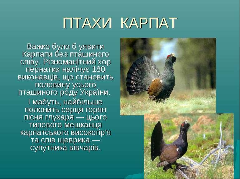 ПТАХИ КАРПАТ Важко було б уявити Карпати без пташиного співу. Різноманітний х...