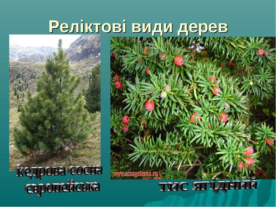 Реліктові види дерев
