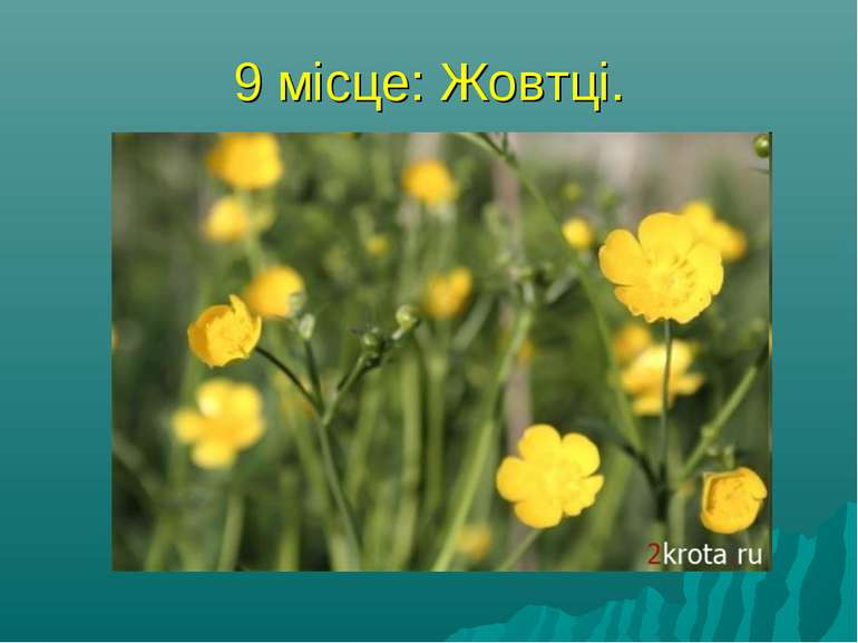9 місце: Жовтці. На думку народу, ця трава має суворий характер - звідси і на...