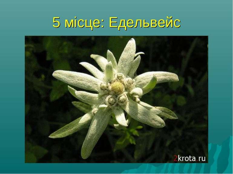 5 місце: Едельвейс найромантичніша рослина - Едельвейс. Насправді йдеться не ...