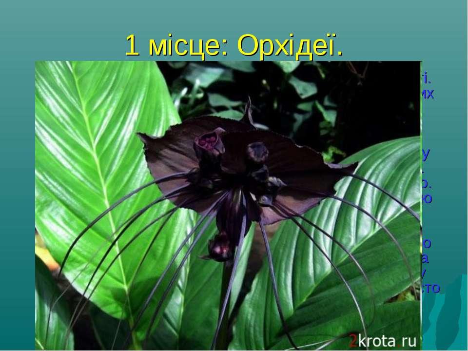 1 місце: Орхідеї. Сімейство цих рослин - одне з найчисленніших у світі. Воно ...