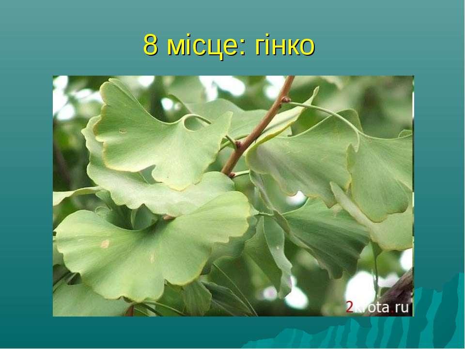 8 місце: гінко Саме древнє нині зростаюче дерево - це гинко, Чжэцзян, що рост...