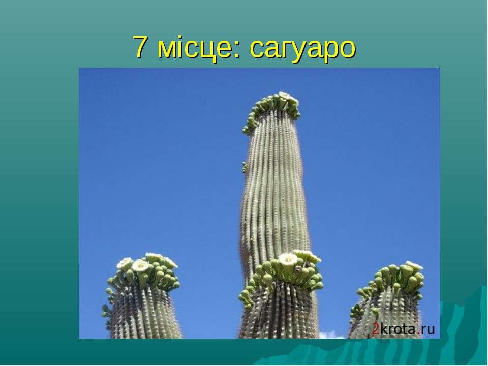 7 місце: сагуаро найбільший кактус у світі, сагуаро, росте в Мексиці і штаті ...