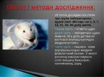 об`єктом дослідження стали три групи лабораторних щурів лінії «Вістар» на 1, ...