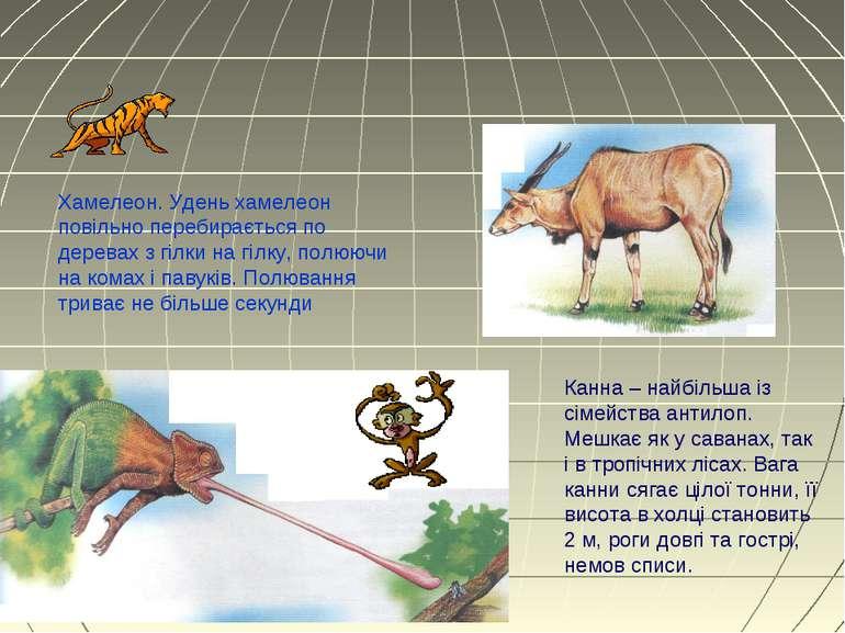 Канна – найбільша із сімейства антилоп. Мешкає як у саванах, так і в тропічни...