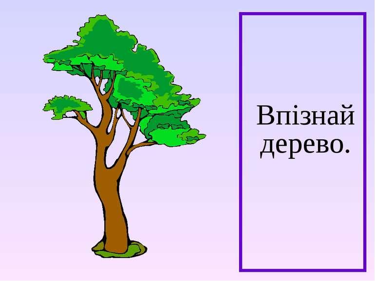 Впізнай дерево.