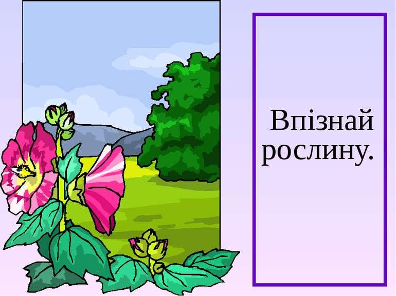 Впізнай рослину.