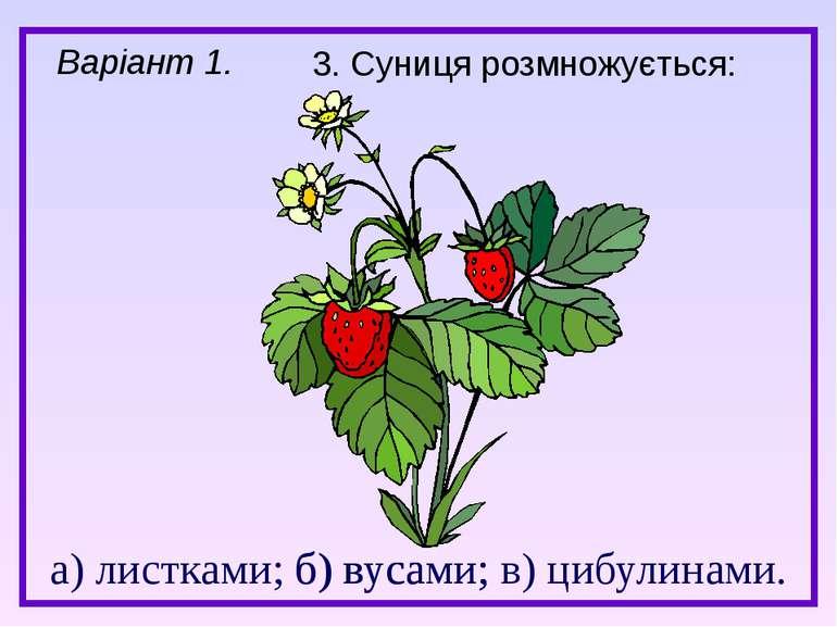 а) листками; б) вусами; в) цибулинами. 3. Суниця розмножується: б) вусами; Ва...