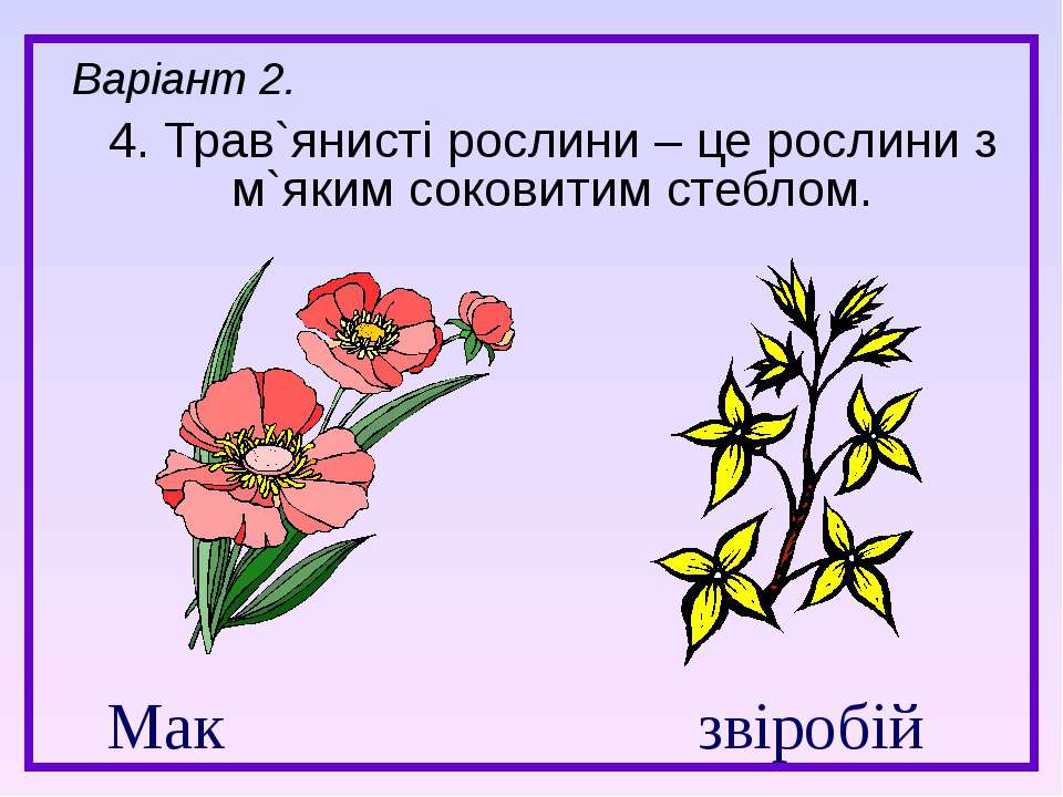 Мак звіробій 4. Трав`янисті рослини – це рослини з м`яким соковитим стеблом. ...