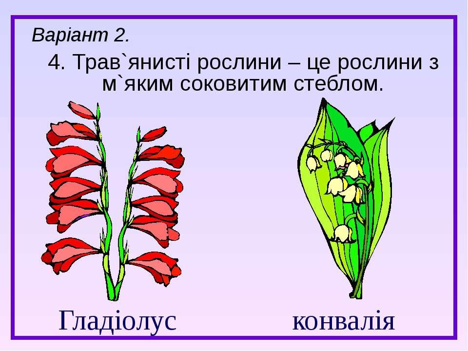Гладіолус конвалія 4. Трав`янисті рослини – це рослини з м`яким соковитим сте...