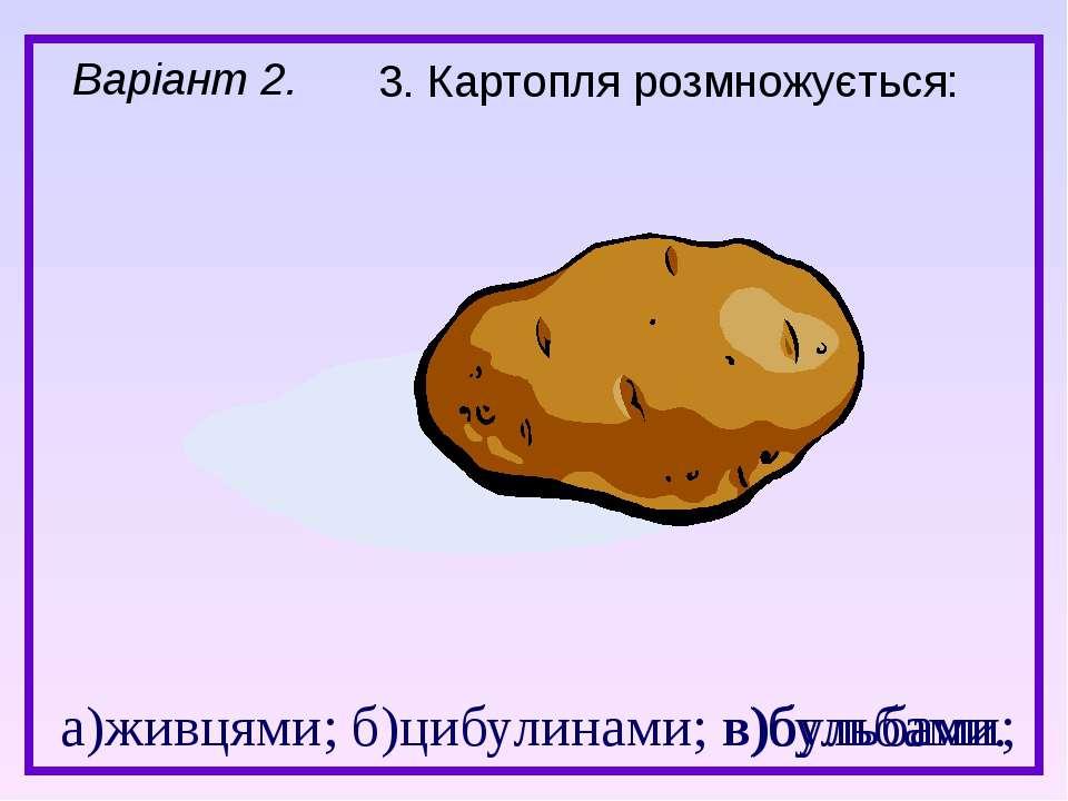 а)живцями; б)цибулинами; в)бульбами. 3. Картопля розмножується: в)бульбами; В...