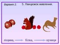 5. Ланцюжок живлення. Варіант 2. ліщина, білка, куниця