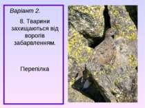 Варіант 2. 8. Тварини захищаються від ворогів забарвленням. Перепілка