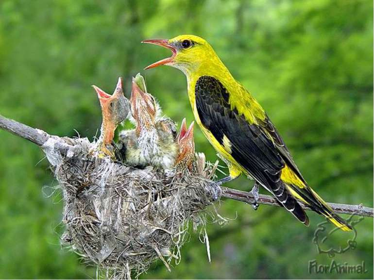 Синиця годує пташенят