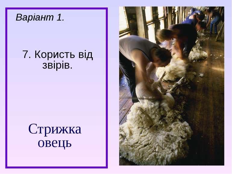 Стрижка овець 7. Користь від звірів. Варіант 1.