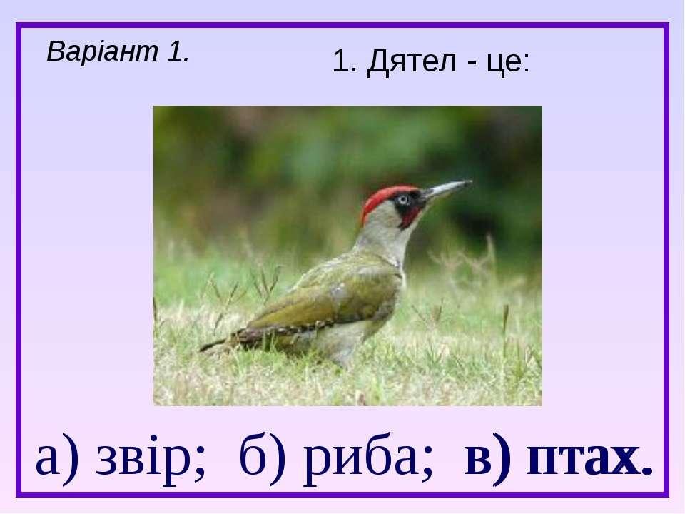 а) звір; б) риба; в) птах. 1. Дятел - це: Варіант 1. в) птах.