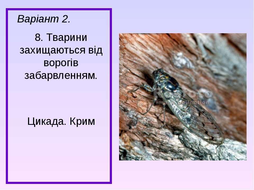 Варіант 2. 8. Тварини захищаються від ворогів забарвленням. Цикада. Крим