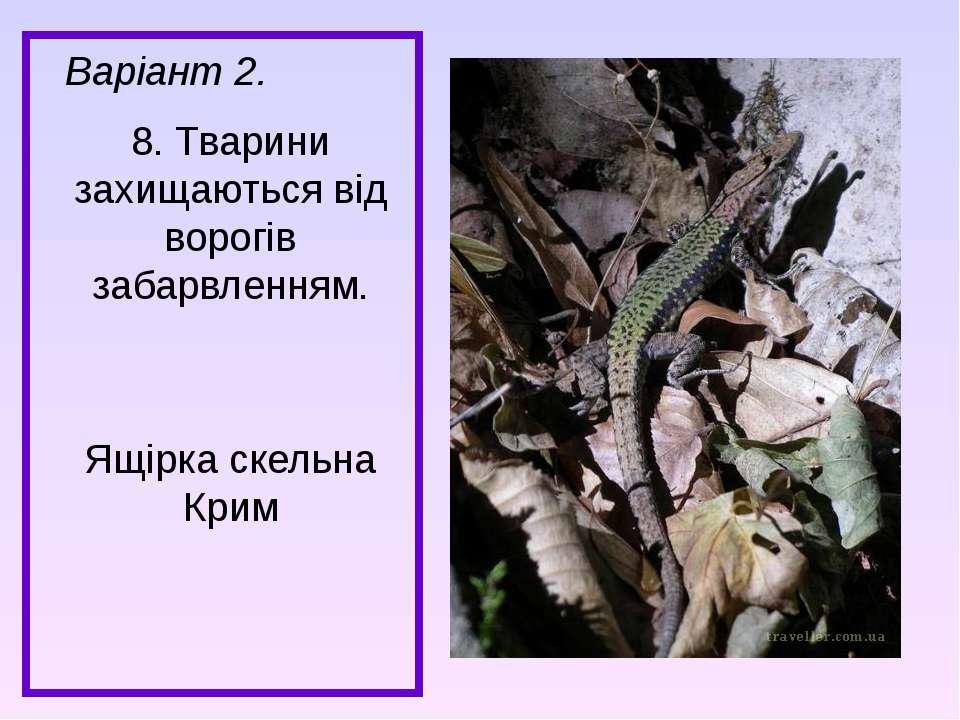 Варіант 2. 8. Тварини захищаються від ворогів забарвленням. Ящірка скельна Крим