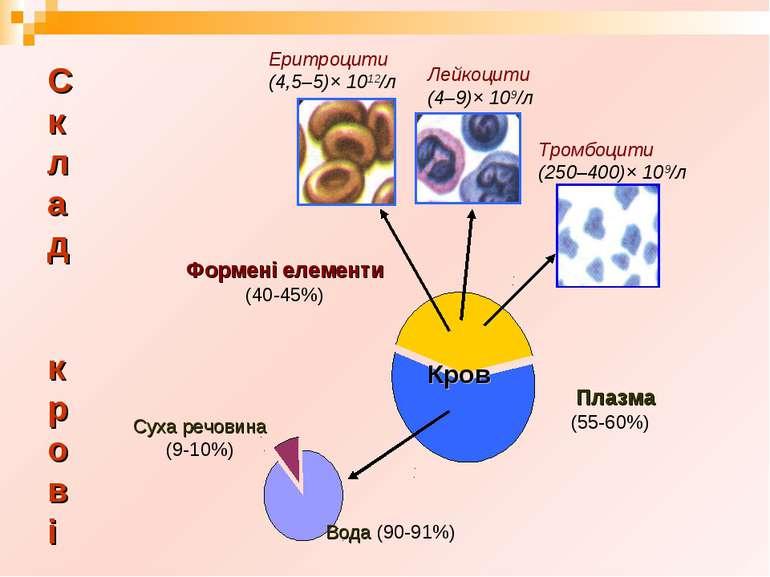 С к л а д к р о в і Формені елементи (40-45%) Суха речовина (9-10%)
