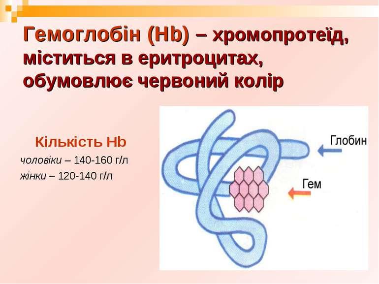 Гемоглобін (Нb) – хромопротеїд, міститься в еритроцитах, обумовлює червоний к...
