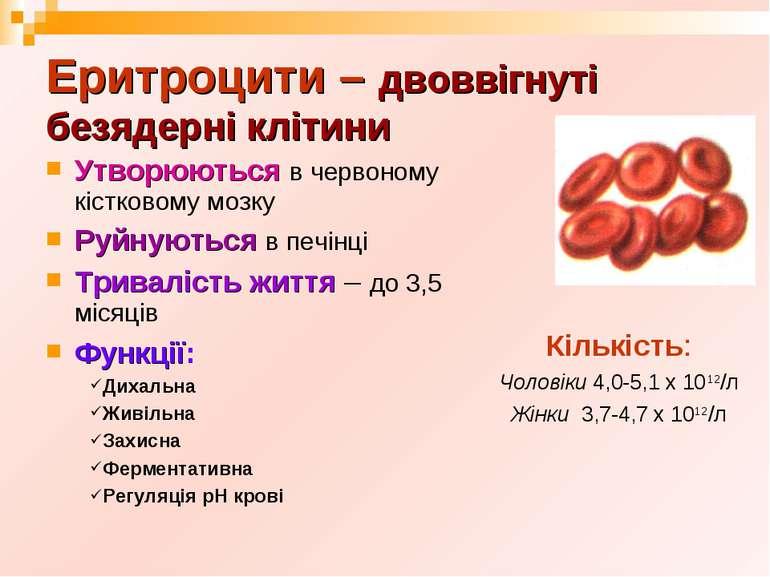 Еритроцити – двоввігнуті безядерні клітини Утворюються в червоному кістковому...