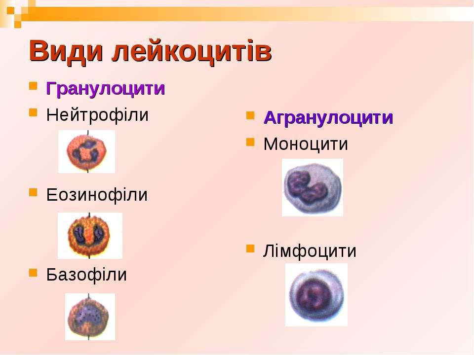 Види лейкоцитів Гранулоцити Нейтрофіли Еозинофіли Базофіли Агранулоцити Моноц...