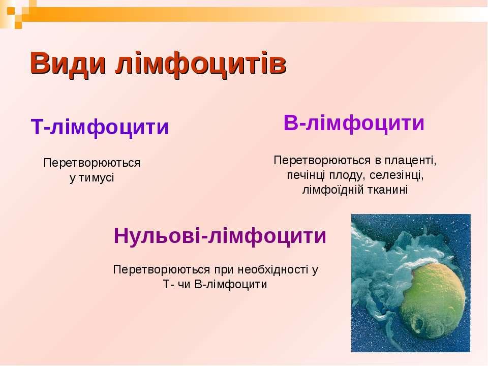 Види лімфоцитів Т-лімфоцити В-лімфоцити Нульові-лімфоцити Перетворюються у ти...