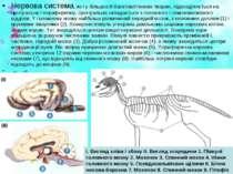 Нервова система, як і у більшості багатоклітинних тварин, підрозділяється на ...