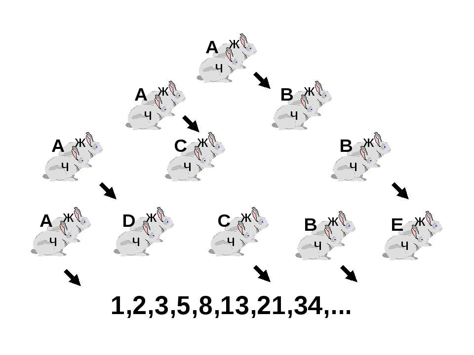 1,2,3,5,8,13,21,34,...