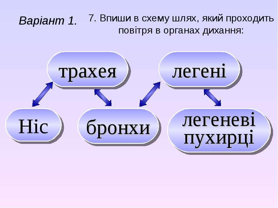 7. Впиши в схему шлях, який проходить повітря в органах дихання: Варіант 1. т...