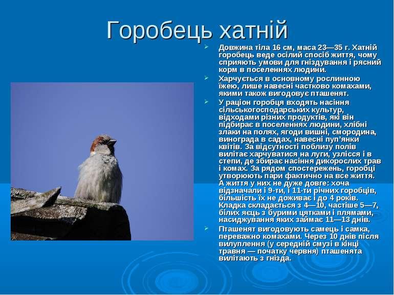 Горобець хатній Довжина тіла 16 см, маса 23—35 г. Хатній горобець веде осілий...