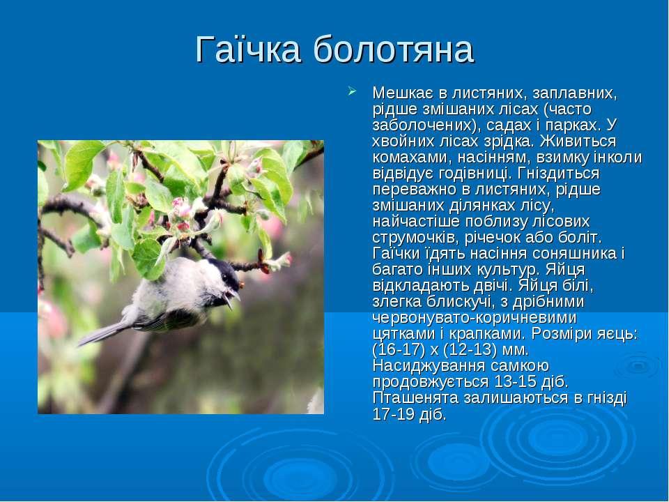 Гаїчка болотяна Мешкає в листяних, заплавних, рідше змішаних лісах (часто заб...