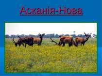 Асканія-Нова