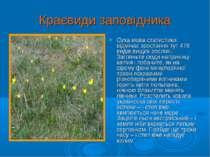 Краєвиди заповідника Суха мова статистики відмічає зростання тут 478 видів ви...
