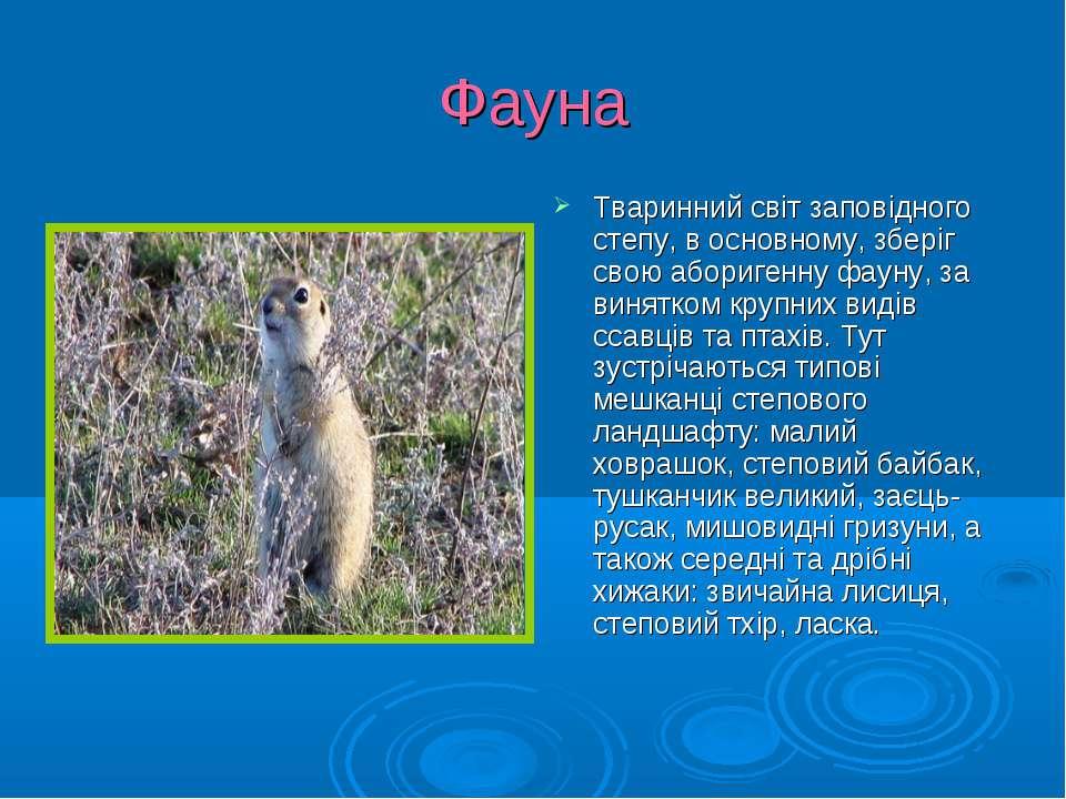 Фауна Тваринний світ заповідного степу, в основному, зберіг свою аборигенну ф...