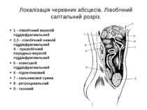 Локалізація черевних абсцесів. Лівобічний сагітальний розріз. 1 - лівобічний ...