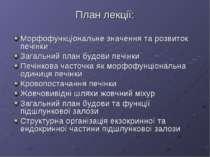 План лекції: Морфофункціональне значення та розвиток печінки Загальний план б...