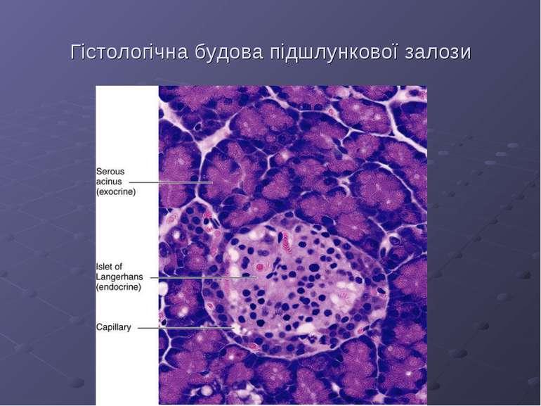 Гістологічна будова підшлункової залози