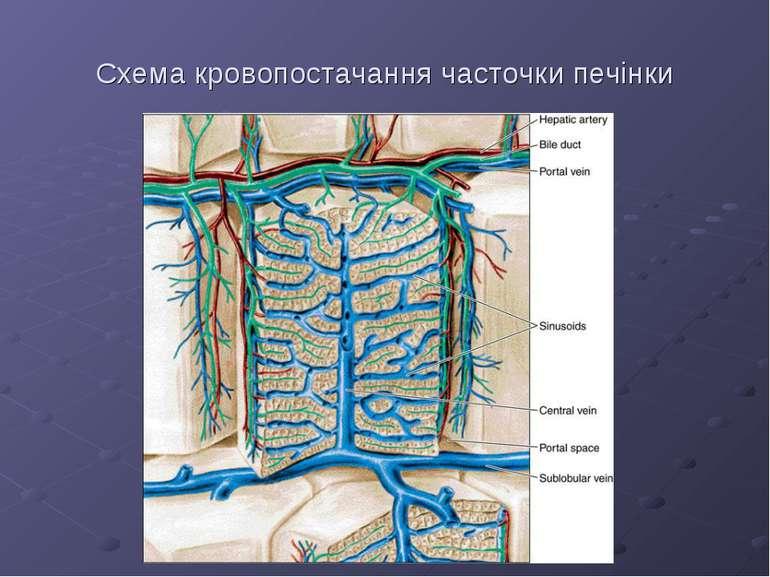 Схема кровопостачання часточки печінки