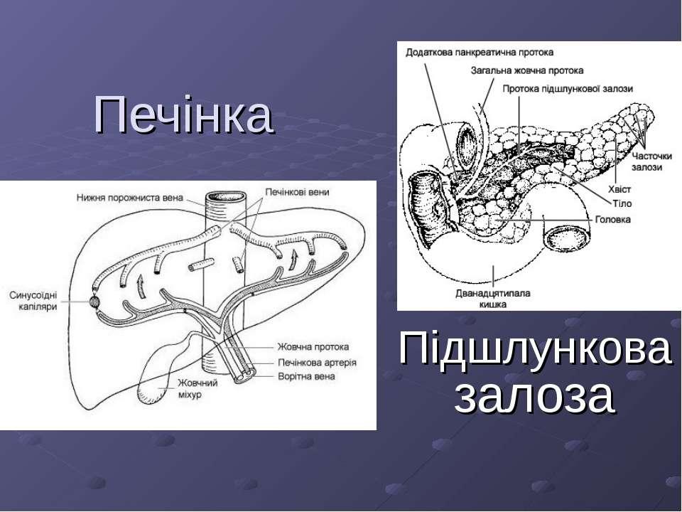 Печінка Підшлункова залоза