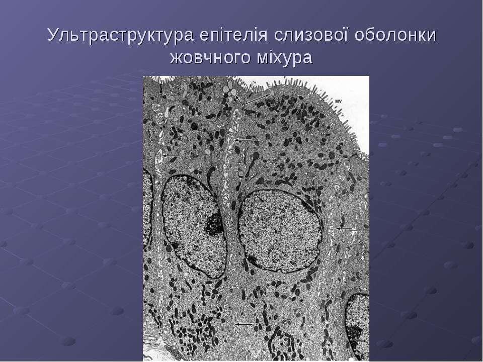 Ультраструктура епітелія слизової оболонки жовчного міхура