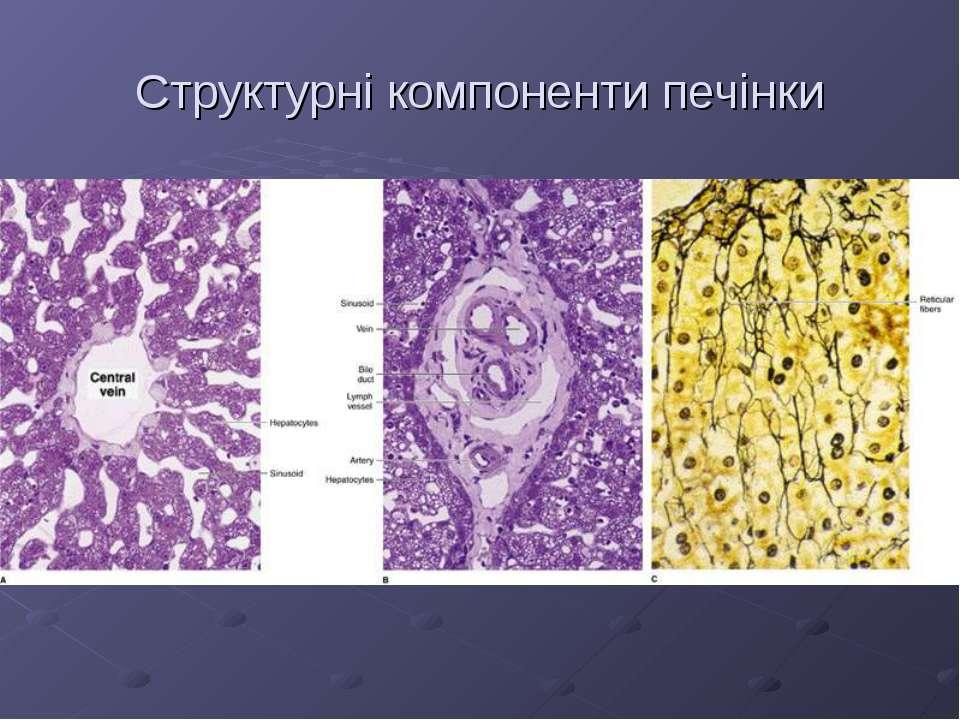 Структурні компоненти печінки