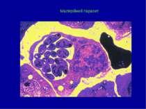 Малярійний паразит