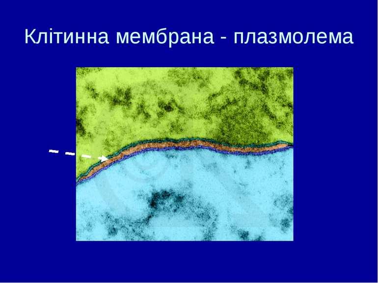 Клітинна мембрана - плазмолема