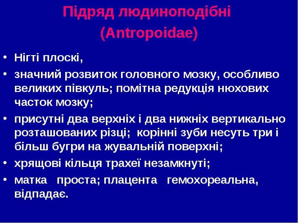Підряд людиноподібні (Antropoidae) Нігті плоскі, значний розвиток головного м...
