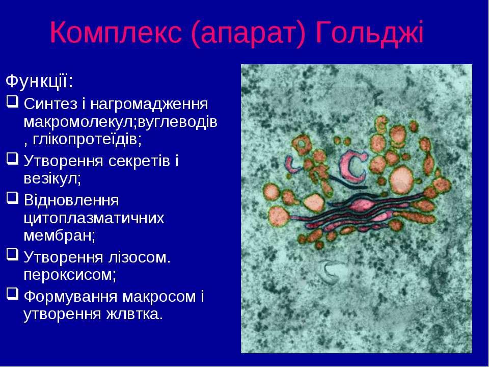 Комплекс (апарат) Гольджі Функції: Синтез і нагромадження макромолекул;вуглев...
