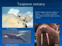 Тварини океану Ґренландський кит Білий ведмідь Морж Багато тварин Арктики жив...